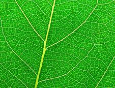 Free Leaf Surface II Stock Photo - 9577800