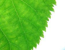 Free Leaf Texture Royalty Free Stock Photography - 9577977