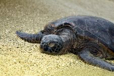 Free Sleeping Turtle Royalty Free Stock Image - 9578736