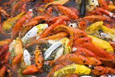 Free Orange Fish Background Stock Photo - 9579640