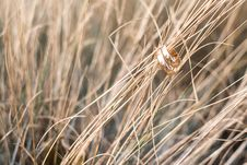 Free Gold Rings On Dry Grasses Stock Images - 95739864