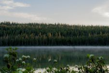 Free Forest On Banks Of Misty Lake Stock Images - 95739884