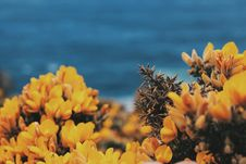 Free Yellow Blossoms  Royalty Free Stock Images - 95739899