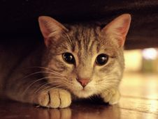Free Curious Ginger Cat Stock Images - 95739944