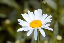 Free White And Yellow Flower In Macro Shot Photography Royalty Free Stock Photo - 95798385
