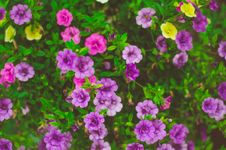 Free Purple Flowers In Sunny Garden Stock Photo - 95798530