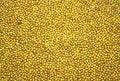 Free Green Mungo  Beans As Texture Royalty Free Stock Photo - 9588525