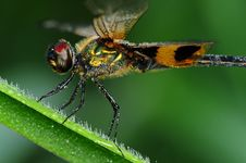 Free Dragonfly And Dew In The Park Royalty Free Stock Photo - 9580005