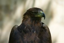 Free Eagle Waiting For Prey Stock Image - 9580551