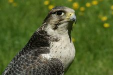 Free Hawk Watching Landscape Stock Photos - 9580613