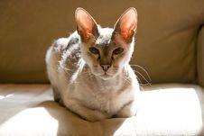 Free Sphinx Cat Stock Photography - 9581492