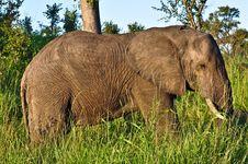 Free Elephant Walk Stock Image - 9581711