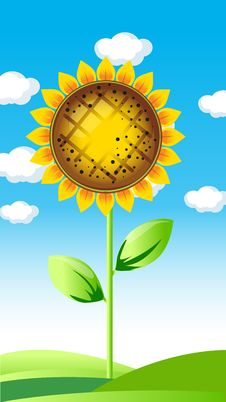 Vector Illustration Of Sunflower Royalty Free Stock Photos