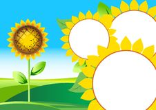 Free Vector Illustration Of Sunflower Royalty Free Stock Photos - 9588728