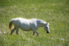 Free White Horse Stock Image - 9589381