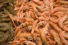 Free Prawns And Shrimps Stock Photos - 9589953
