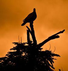 Free Sky, Bird, Silhouette, Fauna Royalty Free Stock Photography - 95821927