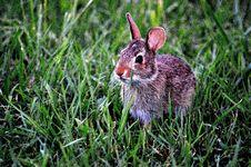 Free Fauna, Mammal, Rabbit, Rabits And Hares Stock Image - 95821951