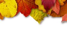 Free Leaf, Maple Leaf, Petal, Autumn Stock Photo - 95821990