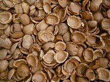 Free Nuts & Seeds, Clam, Nut, Commodity Stock Images - 95822054