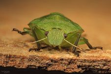 Free Insect, Fauna, Invertebrate, Macro Photography Stock Image - 95825631