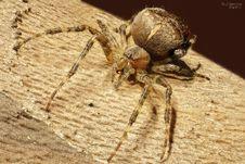 Free Spider, Arachnid, Insect, Invertebrate Stock Image - 95825651