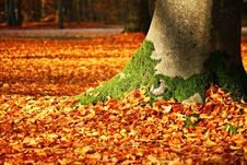 Free Leaf, Autumn, Deciduous, Tree Royalty Free Stock Photography - 95827637
