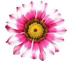 Free Flower, Flowering Plant, Pink, Petal Stock Photography - 95827982