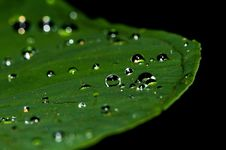 Free Dew, Water, Green, Drop Stock Images - 95829574