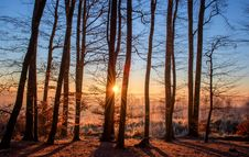 Free Sky, Tree, Nature, Forest Royalty Free Stock Photos - 95829708