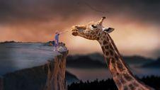 Free Giraffe, Wildlife, Terrestrial Animal, Mammal Royalty Free Stock Photography - 95830117