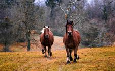 Free Horse, Pasture, Ecosystem, Horse Like Mammal Royalty Free Stock Photo - 95831535