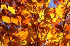 Free Autumn, Yellow, Branch, Leaf Stock Photo - 95834240