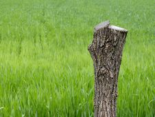 Free Grass, Grassland, Field, Grass Family Stock Photo - 95835880