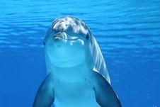 Free Dolphin, Marine Mammal, Common Bottlenose Dolphin, Mammal Royalty Free Stock Image - 95836186