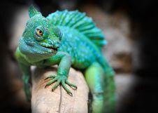 Free Reptile, Green, Lizard, Scaled Reptile Stock Image - 95836511