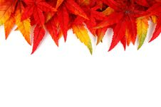 Free Leaf, Maple Leaf, Petal, Tree Royalty Free Stock Photo - 95836745
