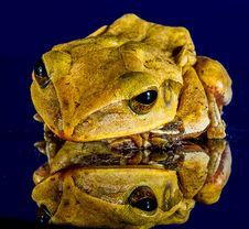 Free Toad, Ranidae, Frog, Amphibian Royalty Free Stock Photos - 95836838