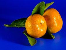 Free Citrus, Fruit, Clementine, Tangerine Stock Photo - 95836860