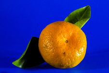 Free Fruit, Citrus, Clementine, Produce Royalty Free Stock Photo - 95837145