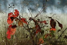 Free Leaf, Autumn, Branch, Flora Royalty Free Stock Photo - 95838225