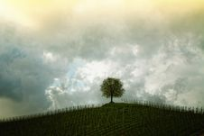 Free Sky, Cloud, Tree, Woody Plant Royalty Free Stock Image - 95839616