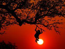 Free Sky, Tree, Silhouette, Orange Stock Photography - 95839712