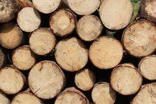 Free Pile Of Logs Stock Image - 95868251