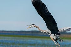 Free Gray And Brown Bird Flying Stock Photography - 95868322