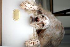 Free Sad Looking Dog Stock Photos - 95868443
