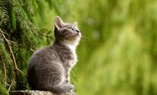Free Cat, Fauna, Small To Medium Sized Cats, Grass Royalty Free Stock Photo - 95886785