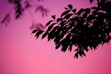 Free Leaf, Pink, Branch, Sky Stock Image - 95888211