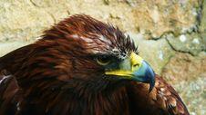 Free Beak, Bird, Fauna, Bird Of Prey Royalty Free Stock Photography - 95890017