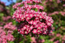 Free Flower, Plant, Pink, Flowering Plant Stock Photo - 95891820
